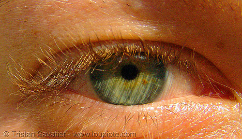 bibi's green eye, bibi, close up, eye color, eyelashes, green eyed, green eyes, iris, macro, pupil, right eye, woman
