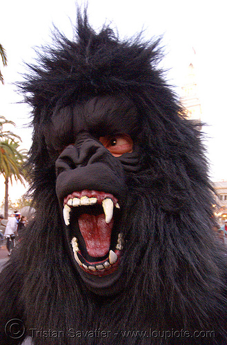 bigfoot at halloween critical mass (san francisco), animal costume, ape, big foot, fur, furry, gorilla, hairy, halloween critical mass, man, monkey, sasquatch, teeth, yeti