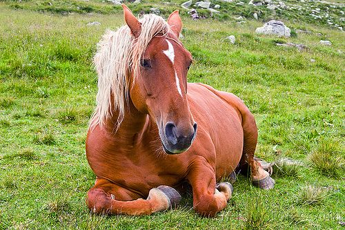 blonde horse lying down, blond horse, blonde horse mane, feral horse, field, grassland, lying down, red horse, resting, turf, wild horse