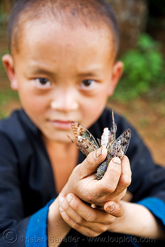 boy with live cicadas (laos), boy, children, cicadas, hands, hintang archaeological park, hintang houamuang, holding, insects, kid, san kong phanh