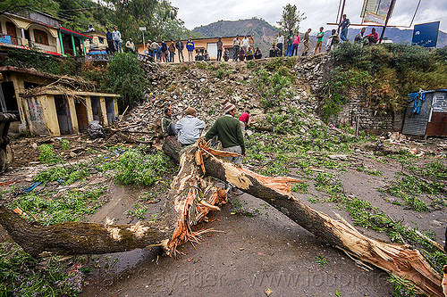 broken tree and damage after storm (india), bhagirathi valley, broken tree, fallen, men, road, storm damage, village