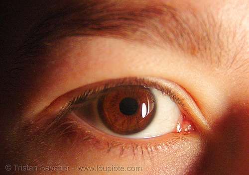 coraline, close up, cora, eye color, iris, macro, pupil, right eye, woman