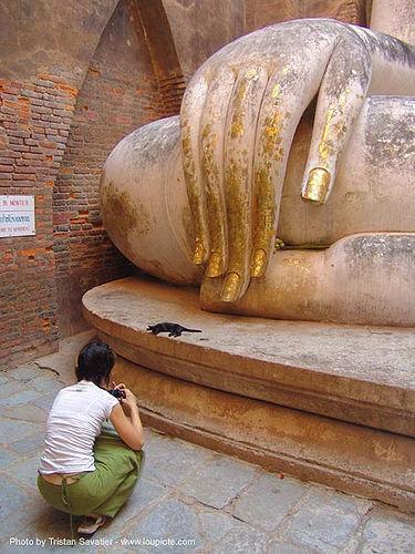 ลูกแมว - พระพุทธรูป - buddha hand - วัดศรีชุม - wat si chum - อุทยาน ประวัติศาสตร์ สุโขทัย - เมือง เก่า สุโขทัย - sukhothai - thailand, anke rega, buddha image, buddha statue, buddhism, buddhist temple, cat, cross-legged, fingers, giant buddha, gilded, golden, hand, kitten, sculpture, sukhothai, wat si chum, woman, ประเทศไทย, พระพุทธรูป, วัดศรีชุม, อุทยาน ประวัติศาสตร์ สุโขทัย, เมือง เก่า สุโขทัย