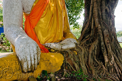 buddha statue and old tree, buddha image, buddha statue, buddhism, cross-legged, khmer temple, laos, tree roots, wat phu champasak