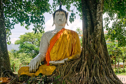 buddha statue and tree, buddha image, buddha statue, buddhism, cross-legged, khmer temple, laos, tree roots, wat phu champasak