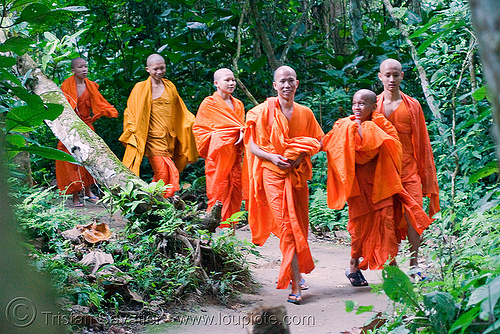 buddhist monks - luang prabang (laos), buddhism, children, jungle, kids, kuang si falls, men, novice, orange, park, stock photo