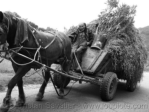 bulgarian peasant - horse cart (bulgaria), carriage, chariot, draft horse, hay, horse cart, peasant, poor, rustic, tires, working animal