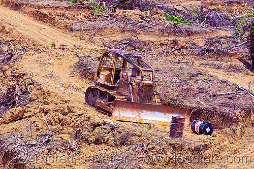 bulldozer used for deforestation (borneo), bulldozer, deforestation, environment, logging