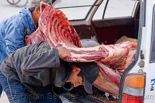 butcher carrying a beef quarter, beef, bolivia, butchers, car, carcass, carrying, delivery, heavy, man, meat market, meat shop, raw meat, rib cage, ribs