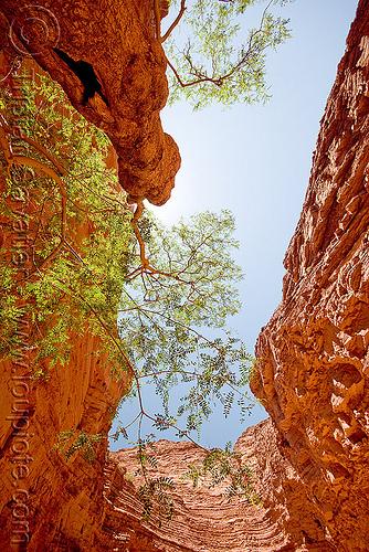 canyon - tree - garganta del diablo - quebrada de las conchas, near cafayate (argentina), calchaquí valley, cliffs, noroeste argentino, quebrada de cafayate, rock, valles calchaquíes