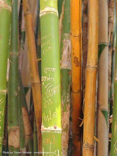 carved graffiti on bamboo - thailand, bamboo, thai graffiti, thailand, writing