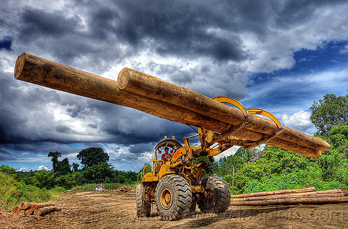 caterpillar 966C carrying tropical tree logs, at work, cat 966c, caterpillar 966c, clouds, cloudy sky, deforestation, environment, front loader, heavy equipment, hydraulic, logging camp, logging forks, machinery, tree logging, tree logs, tree trunks, wheel loader, wheeled, working, yellow