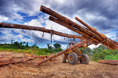 caterpillar 966C with logging fork moving tree logs, at work, borneo, cat 966c, caterpillar 966c, clouds, cloudy sky, deforestation, environment, front loader, logging camp, logging forks, malaysia, tree logging, tree logs, tree trunks, wheel loader, working, yellow