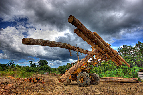 caterpillar wheel loader moving tree logs, at work, borneo, cat 966c, caterpillar 966c, clouds, cloudy sky, deforestation, environment, front loader, logging camp, logging forks, malaysia, tree logging, tree logs, tree trunks, wheel loader, working, yellow