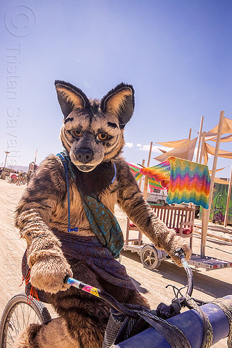 cosplay - guy wearing a coyote costume - burning man 2015, animal costume, bicycle, burning man, cosplay, fur, furry, riding, vignette hyena