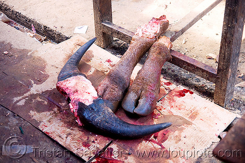 cow horns and feet in meat market (laos), beef, cow feet, meat shop, raw, raw meat, water buffalo