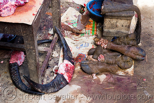 cow horns, feet and tail in meat market (laos), beef, cow feet, meat shop, raw meat, water buffaloes