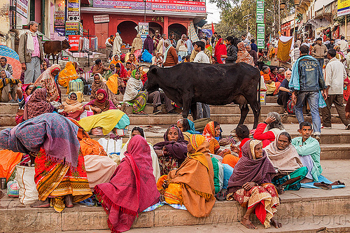 crowd of colorful hindu pilgrims and cow on the ghats of varanasi (india), colorful, crowd, crwod, ghats, hindu, hinduism, india, men, sitting, steps, street cow, varanasi, women