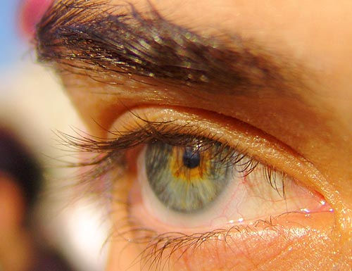 dani's eye - sea monkey, close up, dani, eye color, eyebrow, eyelashes, iris, macro, pupil, right eye, woman