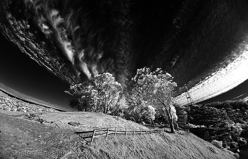 daylight infrared fisheye photo of the san francisco sky, clouds, fisheye, near infrared, sutro tower, tank hill, trees