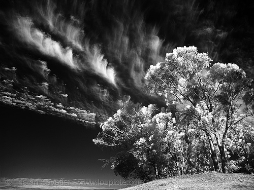 daylight infrared photo of the san francisco sky, clouds, near infrared, tank hill, trees