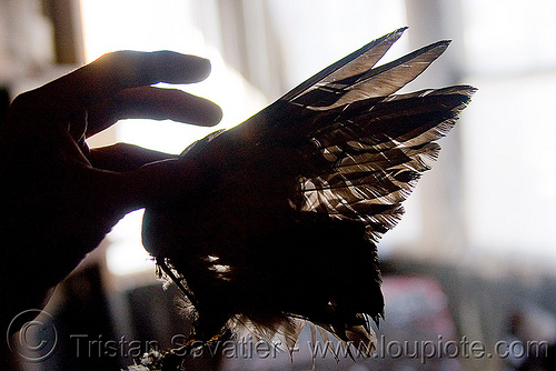 dead pigeon wing in abandoned building (san francisco), dead, defenestration building, hand, pigeon