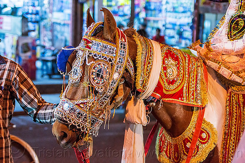 decorated horse at indian wedding (india), decorated horse, india, night, rishikesh, wedding