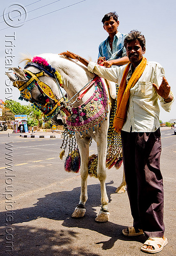 decorated horse en route for a wedding (india), bridle, decorated horse, horse-riding, horseback riding, indian wedding, men, road