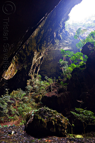deer cave entrance - mulu (borneo), backlight, borneo, cave mouth, caving, deer cave, ferns, gunung mulu national park, malaysia, natural cave, plants, spelunking