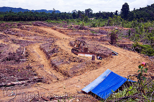 deforestation - cleared rain forest parcel prepared for plantation (borneo), borneo, bulldozer, deforestation, environment, logging, malaysia