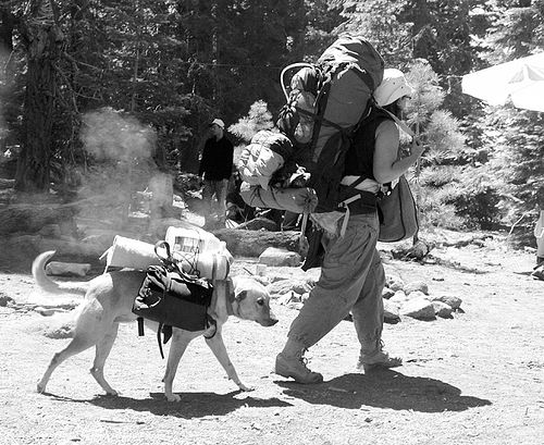 dog-with-backpack - rainbow gathering - hippie, backpacker, backpacks, dog backpack, hippie, rainbow family, rainbow gathering
