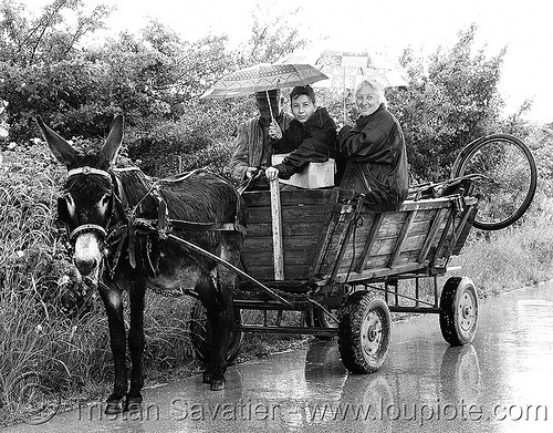 donkey-wagon - peasans - road (bulgaria), asinus, bicycle, donkey cart, donkey wagon, equus, horse cart, man, peasants, poor, road, umbrellas, women, working animal