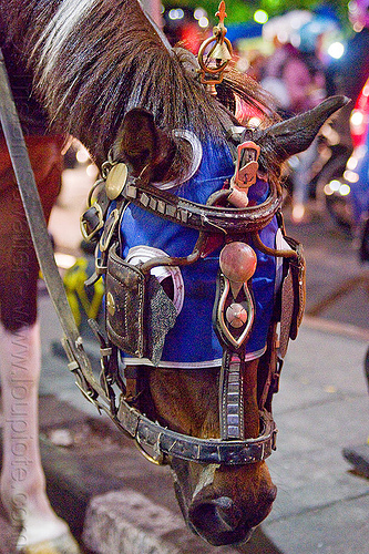 draft horse with bridle, mask and blinders, blue, bridle, draft horse, draught horse, horse hood, horse mask, indonesia, jogja, malioboro, night, yogyakarta