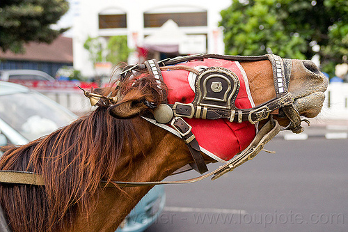 draft horse with mask and bridle, draft horse, draught horse, horse bridle, horse mask, indonesia, jogja, yogyakarta