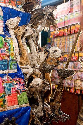 dried llama fetuses - witch market - la paz (bolivia), babies, dead, dried, dry, fetus, gruesome, la paz, llamas, macabre, morbid, mummified, offerings, shop, street market, witch market