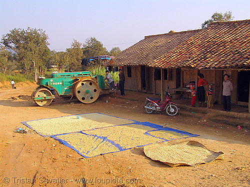 drying beans on the road - vietnam, drying beans, heavy equipment, machinery, road construction, road roller, roller-compactor, sun drying