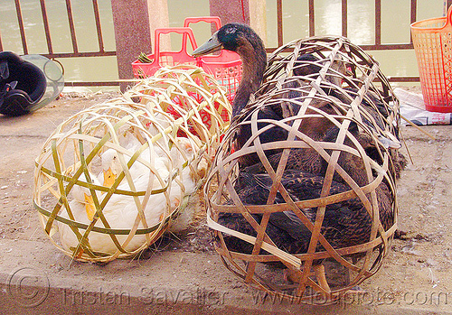ducks in bamboo cages, bamboo cages, birds, cao bằng, ducks, live, poultry, vietnam