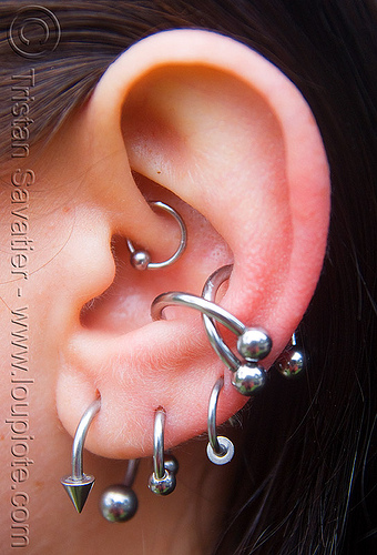 ear piercings with steel rings - catherine, cartilage piercing, catherine, dirty bird party, ear piercing, ear rim piercing, earlobe, earrings, helix piercing, jewelry