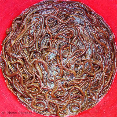 eel soup, eel soup, foodstuff, klingon gagh, lang sơn, live, many, river eels, river fishes, slimy, street market