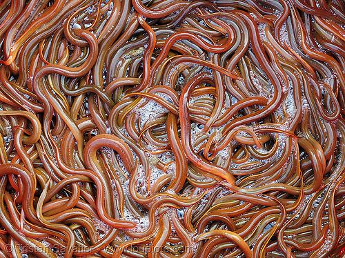 eels, eel soup, foodstuff, klingon gagh, lang sơn, live, many, river eels, river fishes, slimy, street market, tails