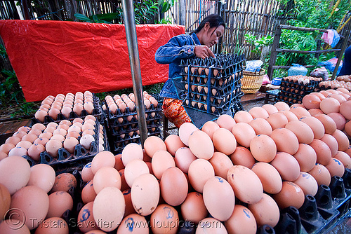 eggs on the market - luang prabang (laos), eggs, luang prabang, market