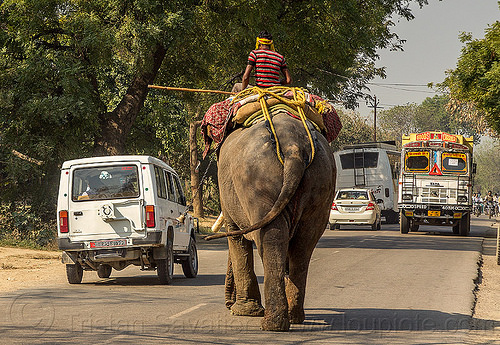 elephant and cars on road (india), asian elephant, cars, elephant riding, lorry, mahout, man, road, traffic, truck