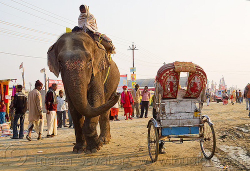 elephant and cycle rickshaw (india), asian elephant, cycle rickshaw, elephant riding, elephant trump, hindu pilgrimage, hinduism, india, maha kumbh mela, mahout, man