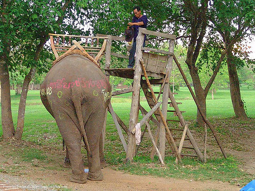 ช้าง - elephant - painted - thailand, elephant riding, ladder, man, park, people, rear, stairs, steps, tail, trees, ช้าง, ประเทศไทย