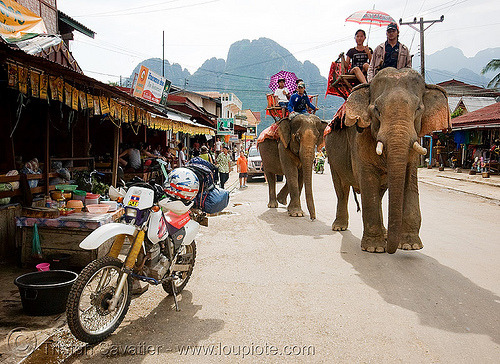 elephant riding - honda XR 250 - vang vieng (laos), 250cc, asian elephant, dual-sport, elephant riding, elephants, honda motorcycle, honda xr 250, laos, mahout, man, motorcycle touring, road, vang vieng