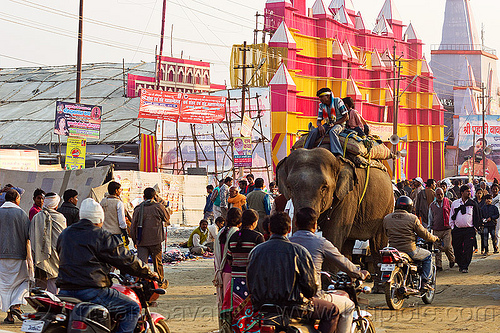 elephant riding in street traffic - kumbh mela 2013 (india), ashram, asian elephant, crowd, elephant riding, hindu pilgrimage, hinduism, india, maha kumbh mela, mahout, man, motorcycles, traffic