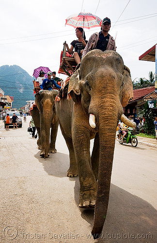 elephant riding - vang vieng (laos), asian elephant, elephant riding, elephants, laos, mahout, man, vang vieng