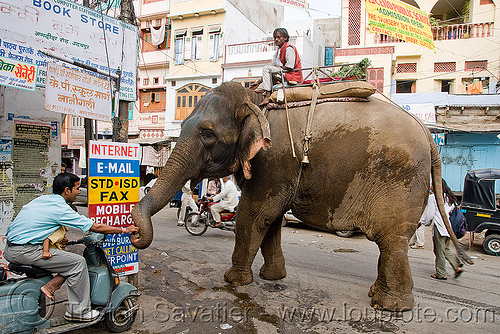 elephant with his mahout, asian elephant, elephant riding, mahout, men, street