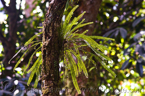 epiphyte plant, epiphyte plant, gunung mulu national park, jungle, leaves, rain forest