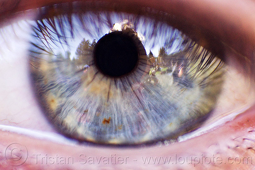 eye closeup - eye iris texture, close-up, eye color, gray eye, iris, left eye, lorraine, pupil, reverse lens macro, texture, woman